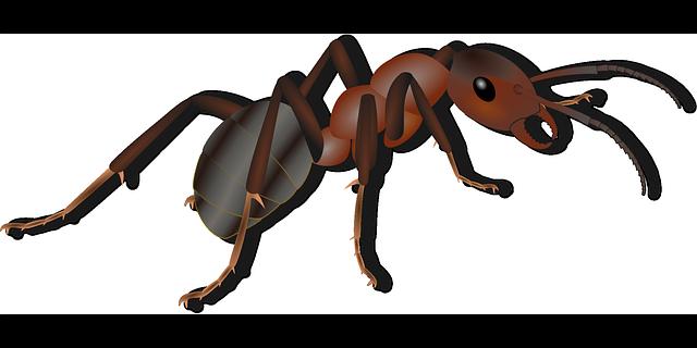 kreslený mravenec