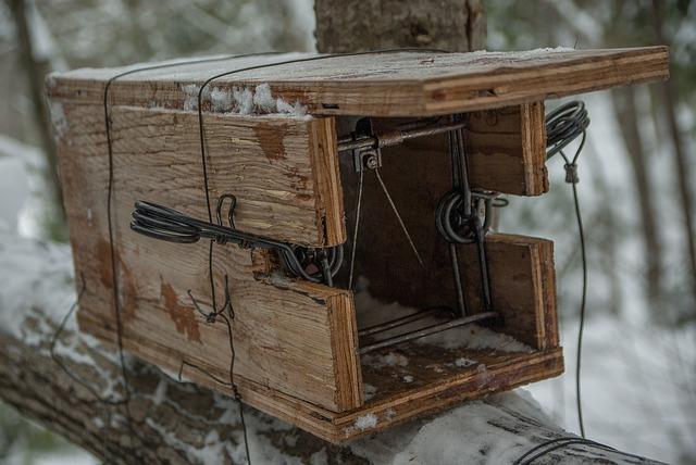 dřevěna past