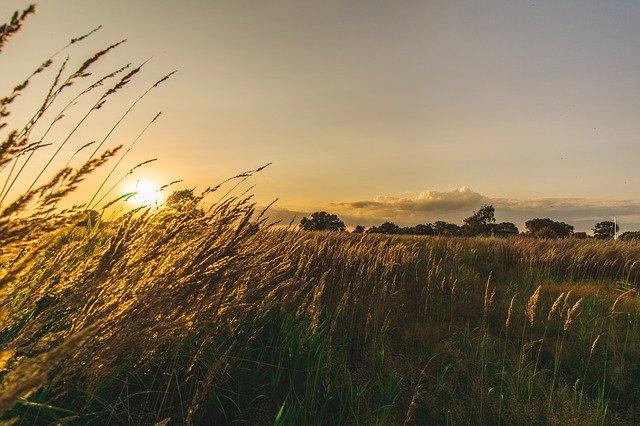 západ slunce a tráva.jpg