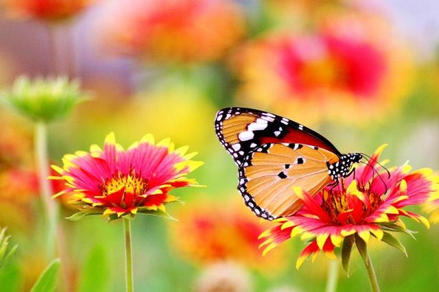 louka, rozkvetlé květiny